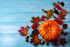 Thanksgiving background with ripe pumpkin on blue wooden table Stock Image