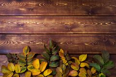 Thanksgiving background with rosehip leaves, copy space stock image