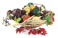 Thanksgiving basket Royalty Free Stock Images