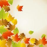 Thanksgiving card Stock Photos