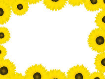 Thanksgiving card with sunflowers Royalty Free Stock Image