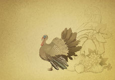 Thanksgiving card with turkey. Vintage decorative Thanksgiving background with turkey and cornucopia Stock Photography