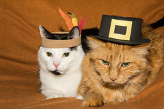 Thanksgiving Cats. Cute cats on Thanksgiving Royalty Free Stock Photo