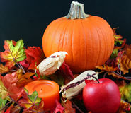 Thanksgiving Centerpiece Royalty Free Stock Image
