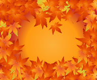 Thanksgiving Concept Royalty Free Stock Image