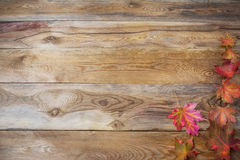 Thanksgiving  concept with fall maple leaves on wooden backgroun Stock Photos