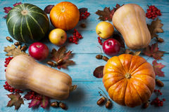 Thanksgiving  concept with pumpkins and leaves on blue wooden ba Royalty Free Stock Images