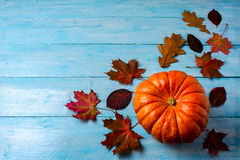 Thanksgiving concept with ripe pumpkin on blue wooden background Stock Image