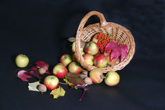 Thanksgiving cornucopia. Thanksgiving basket with apples,nuts and rowan Stock Photos