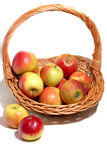 Thanksgiving cornucopia. Thanksgiving basket with apples isolated Stock Images