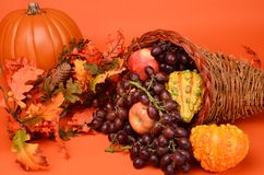 Thanksgiving Cornucopia. Beautiful array of fruits and vegetable for the autumn sean and Thanksgiving Royalty Free Stock Photography