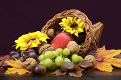 Thanksgiving Cornucopia Centerpiece. Thanksgiving cornucopia, wicker horn of plenty, centerpiece with fruit, nuts, leaves and sunflowers on dark wood table Royalty Free Stock Photos