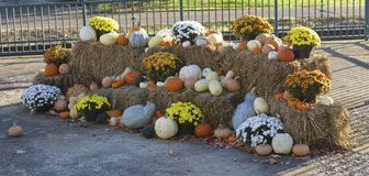 Thanksgiving Cornucopia Decorations. Pumpkins and flowers decorated on bales of hay Royalty Free Stock Image