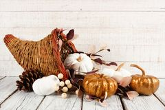 Thanksgiving cornucopia with white and gold pumpkins against white wood royalty free stock image