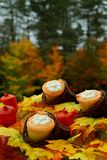 Thanksgiving Cupcakes in Mini Cornucopia Stock Image