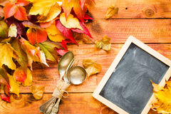 Thanksgiving day, autumn leaves background stock images