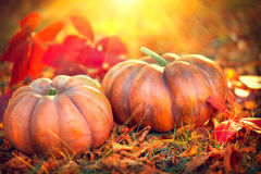 Thanksgiving day background. Orange pumpkins over nature background Stock Images