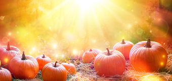 Free Thanksgiving Day Banner - Pumpkins In Field Stock Photo - 80017020
