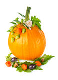 Thanksgiving day composition of pumpkin with fruit flower and  green leaf. Stock Photography