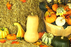 Thanksgiving Day decoration. Picture of bale of hay and assorted pumpkins, squashes, gourds, corncobs and falls from the trees leaves traditional decoration for Stock Photography