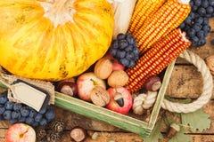 Thanksgiving day: Dienblad van verschillende de herfstgroenten royalty-vrije stock fotografie