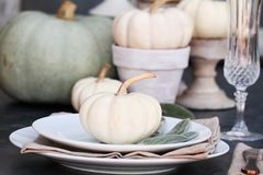 Fall Table Setting. Thanksgiving Day or Halloween place setting with heirloom mini white and grey pumpkins stock photography