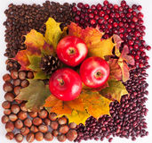 Thanksgiving Day. Happy thanksgiving background images. Thanksgiving beautiful food image. This is a picture for designers and print stock image