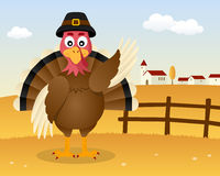 Thanksgiving Day Scene - Turkey Greeting Royalty Free Stock Photos