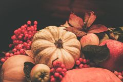 Thanksgiving day still life Stock Photography