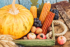 Thanksgiving day: Tray of different autumn vegetables Stock Photography