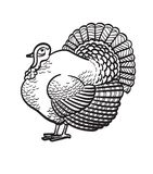 Thanksgiving day turkey hand drawn sketch icon. Thanksgiving day turkey sketch doodle icon for web, mobile and infographics. Hand drawn turkey vector icon Stock Photos