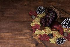 Thanksgiving decor with horn of plenty and frosted pine cones royalty free stock image