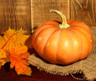 Thanksgiving decoration pumpkin Royalty Free Stock Image