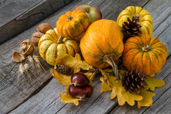 Thanksgiving decorations on rustic background. Thanksgiving decorations - pumpkins nuts oat pine cone apple, rustic wood background Stock Image