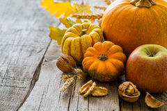 Thanksgiving decorations on rustic background. Thanksgiving decorations - pumpkins nuts oat, rustic wood background Royalty Free Stock Photos