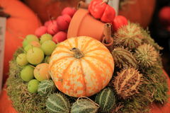 Thanksgiving decorations Stock Photos