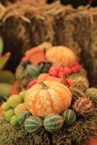 Thanksgiving decorations Royalty Free Stock Image