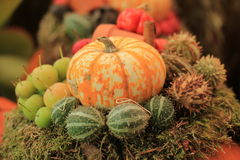 Thanksgiving decorations Stock Image