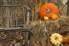 Thanksgiving Display of Pumpkin and Gourds Stock Photos