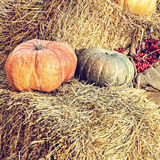 Thanksgiving Display of Pumpkin on hay bale.Retro style image. Royalty Free Stock Photos