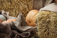 Thanksgiving Display.Pumpkins and Gourds among bale of straw. Royalty Free Stock Image
