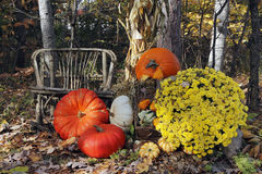 Thanksgiving Display of Pumpkins and Gourds Royalty Free Stock Photography