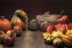 Thanksgiving display with pumpkins, gourds, feather Birdsand pom Stock Photography