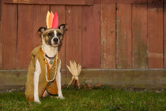 Thanksgiving Dog Royalty Free Stock Photography
