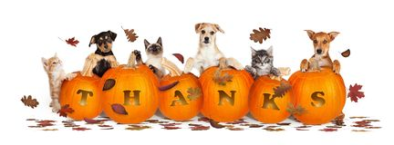 Free Thanksgiving Dogs And Cats With Falling Leaves Royalty Free Stock Images - 130818579