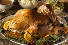 Thanksgiving fait maison entier Turquie Photographie stock libre de droits