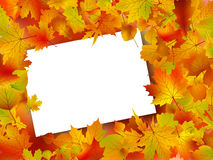 Thanksgiving Fall Autumn Background. Image and Illustration composition for Thanksgiving invitation border or background with copy space Royalty Free Stock Photo