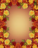 Thanksgiving Fall Autumn Border mums. Image and illustration composition mums for Thanksgiving, Fall, Autumn  Leaves and flowers page border, background or Royalty Free Stock Photo