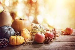 Thanksgiving, fall or autumn greeting background with pumpkin Royalty Free Stock Photography