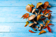 Thanksgiving or fall background with forest mushrooms and fall l Royalty Free Stock Photo
